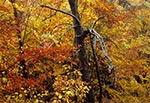 Jesień w kniei