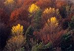 Jesienne lasy Roztocza Zachodniego