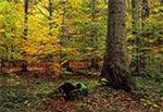 Roztoczańskie lasy