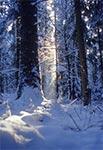 Zima w Roztoczańskim Parku Narodowym