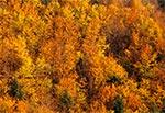 Jesienna buczyna roztoczańska