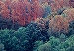 Lasy w świetle zachodzącego słońca