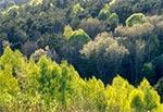 Roztocze Szczebrzeszyńskie. Zadrzewienia na tym terenie znajdują się głównie tam, gdzie są wąwozy albo zbocza są bardzo strome