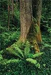 Las w okolicach Siedlisk Tomaszowskich - zdjęcie naświetlone na filmie Fujichrome Velvia 100, jednym z podstawowych slajdów na jakich fotografujemy
