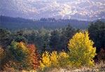 Lasy Roztocza Środkowego w okolicach wsi Bliżów