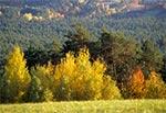 Lasy Roztocza Środkowego - okolice Bliżowa