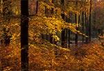 Jesienny las Roztocza Wschodniego / Południowego