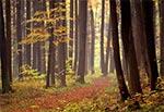 Mglisty jesienny dzień w roztoczańskim lesie