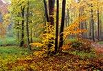 Roztoczańskie lasy w jesiennej tonacji