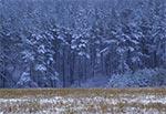 Zima w lasach Roztocza Wschodniego / Południowego