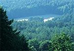 Lasy Roztocza Wschodniego / Południowego latem