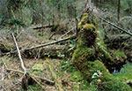 Rezerwat Międzyrzeki w Roztoczańskim Parku Narodowym