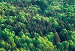 Wiosenne lasy Roztocza Zachodniego