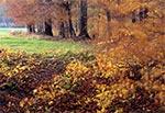 Jesienny wiatr - droga do Wojdy
