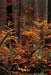 Jesień w RPN