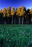 Rezerwat Wieprzec w Padole Zamojskim