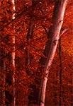 Rezerwat Bukowy Las koło Narola