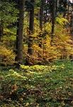 Roztoczański Park Narodowy jesienią
