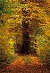 Tajemniczy zakątek w lasach Roztocza Środkowego
