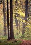 Roztoczański las w mglisty jesienny dzień
