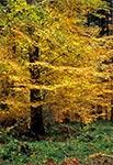Entuzjastyczne barwy jesiennych lasów