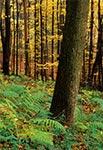 W lasach krasnobrodzkich jesienią