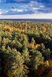 Lasy Roztocza Wschodniego / Południowego z lotu ptaka