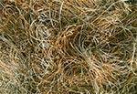 Zeszłoroczne trawy na przedwiośniu - rezerwat Wieprzec