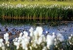 Rezerwat Obary koło Biłgoraja
