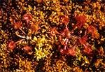 Rosiczki w rezerwacie Międzyrzeki