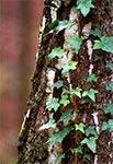Lasy w okolicy Szewni