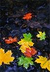 Jesienne liście w potoku Szum