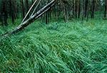 W rezerwacie Międzyrzeki - Roztoczański Park Narodowy