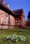 Przebiśniegi na trawniku pod leśniczówką we Floriance