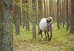Ostoja Konika Polskiego w Roztoczańskim Parku Narodowym
