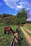 Koń we Wojdzie