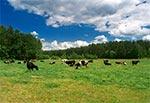 Pastwisko w Krasnobrodzkim Parku Krajobrazowym
