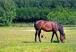 Małe ranczo w miejscowości Wolaniny