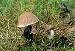 Ślimaki też lubią grzybki - ten akurat wcina kozaka siwego (Koźlarz babka). Możecie wierzyć czy nie ale to Roztocze Wschodnie - okolice Gorajca