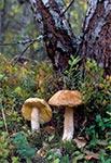 Kozaki nie tak daleko od wsi Kozaki - w lesie nad Tanwią