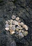 Skamieniałości z kamieniołomu w Hucie Różanieckiej