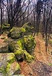 Rezerwat Kamień koło Stanisławowa