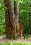 Kapliczka 5 sosen w Wólce Żmijowskiej - najmniejszej miejscowości w gminie Wielkie Oczy