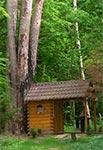 Kapliczka 5 sosen w Wólce Żmijowskiej - niestety po pożarze sosny uschły