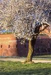 Fragment zamojskiego bastionu siódmego wiosną
