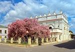 Rajska jabłoń przed synagogą zamojską na etapie kiedy kwiaty są w pełni rozwinięte, czyli mają barwę bladoróżową (wielkość oryginalnego pliku 44 mln pix)