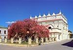 Rajska jabłoń przed synagogą zamojską na etapie kiedy kwiaty są jeszcze nierozwinięte, czyli mają barwę ciemnoróżową  (wielkość oryginalnego pliku 44 mln pix)