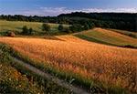 Pola wsi Obrocz