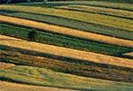 Pola Soch u stóp Bukowej Góry koło Zwierzyńca