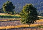 Lato na Roztoczu Środkowym - wierzchowina między Starą Hutą a Senderkami